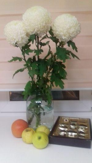 Праздник зимой. Москва Flower Indoors  No People Plant Close-up Home Interior Table Flower Arrangement Nature Flower Head Day