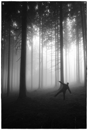 foggy forrest V Bw Day Fog Forest Landscape Lawoe Nature Outdoors People Tranquil Scene Tranquility Tree