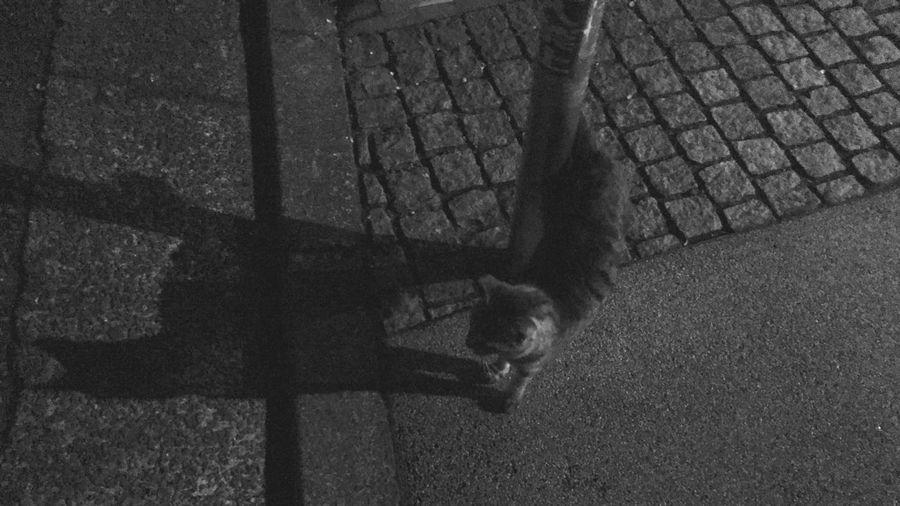 野良猫 Stray Cat 夜ねこ キジトラ