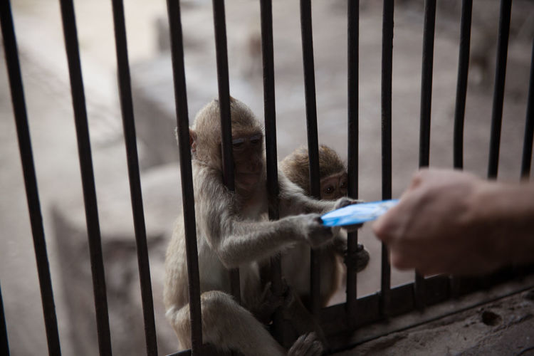 Monkey taking credit card from man at temple