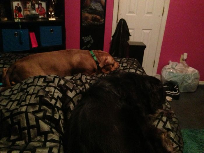 These 2 Done Took Over My Bed