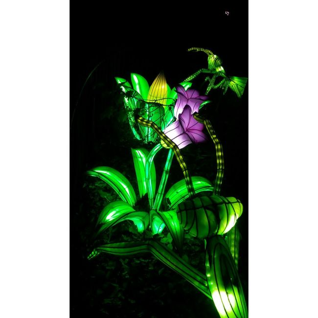 Green Antz Flower Artificial Black Background Illuminated Green Color EyeEmNewHere