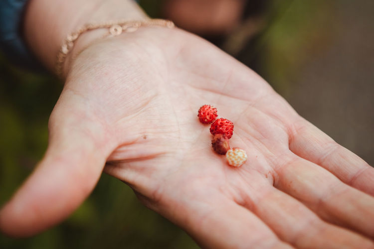 Close-up of woman hand holding tiny strawberries outdoors