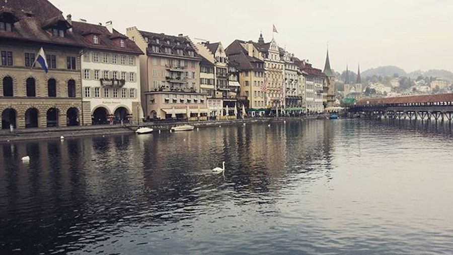 Lake Lucerne Lucerne Luzern Naturelovers Naturegeography Swans Peacefulcity