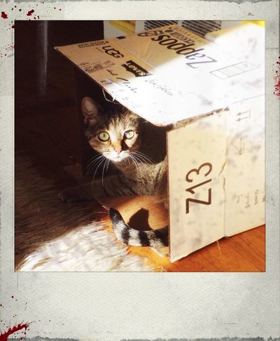 Photographic Evidence Cat♡ Polamatic