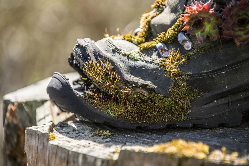 Close-up of hummingbird on rock