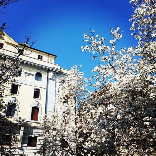 Instapadova Piazza Garibaldi