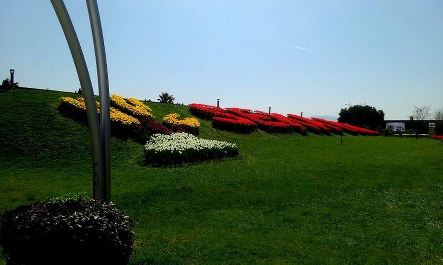 #Blue #colorful #flowers #grass #red #sunset #sun #clouds #skylovers #sky #nature #beautifulinnature #naturalbeauty #photography #landscape #TURKEY/Kocaeli #White #yellow #yesterday