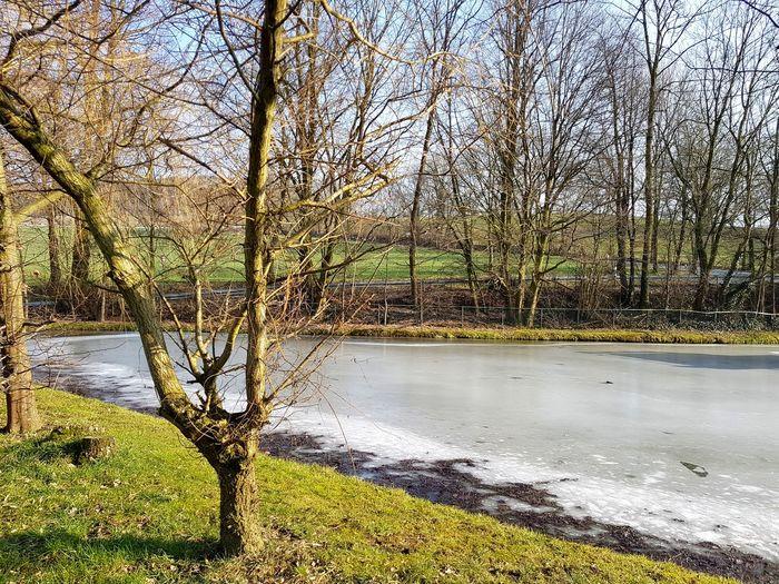 Icy Pond Frozen