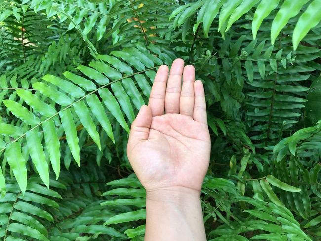 Human Hand Human Body Part Green Color Leaf Plant Day Outdoors