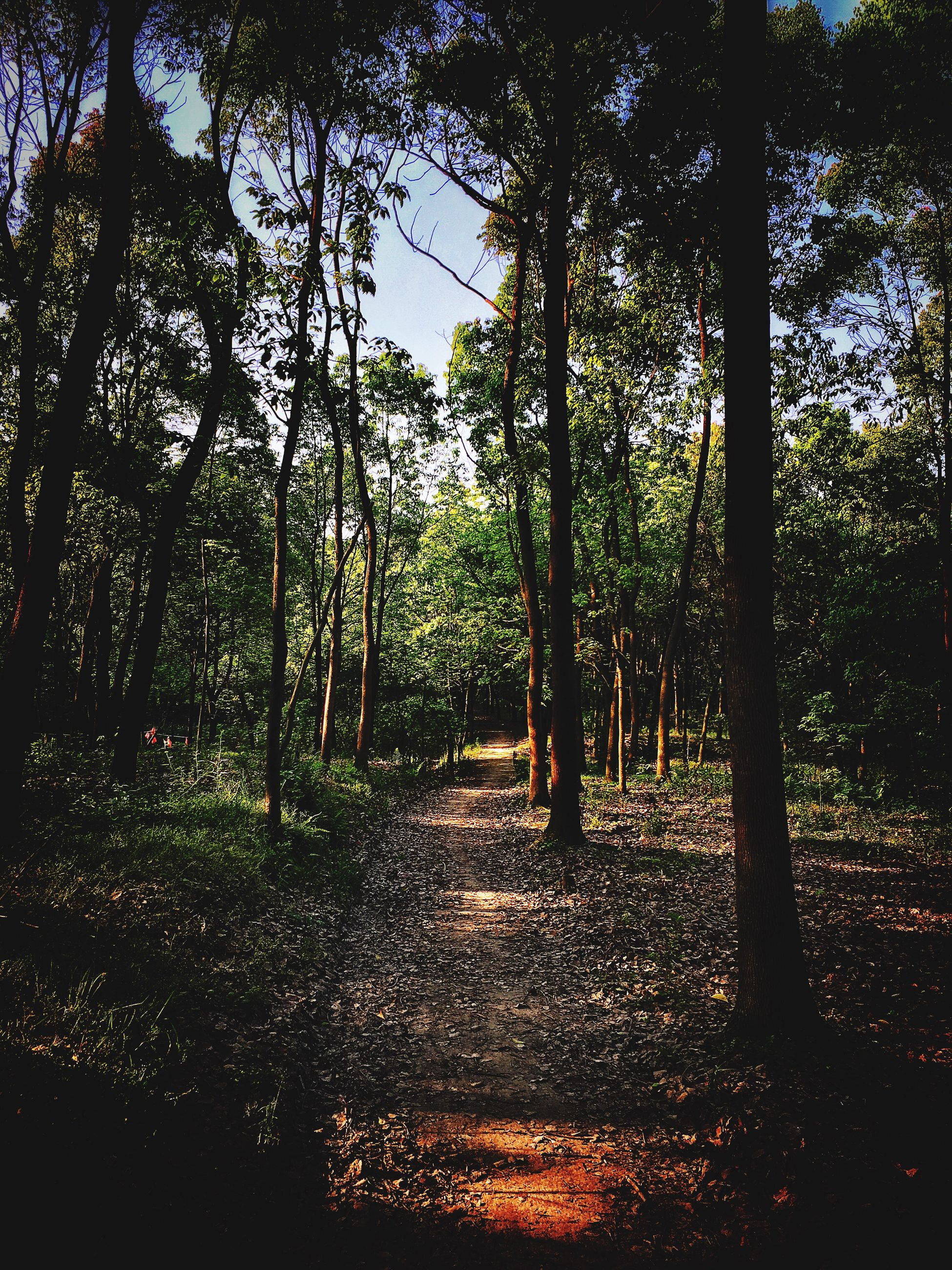 tree, tranquility, growth, tranquil scene, nature, tree trunk, beauty in nature, forest, scenics, sunlight, branch, woodland, autumn, park - man made space, shadow, landscape, idyllic, outdoors, non-urban scene, footpath