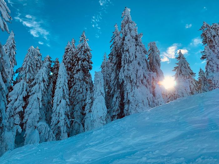 Low angle view of snow covered pine trees in hill against blue sky