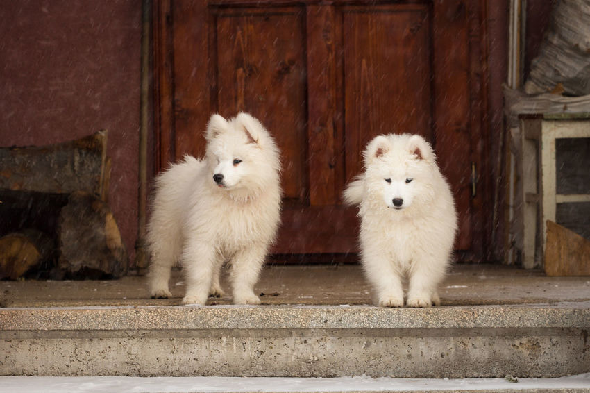 Animal Themes Close-up Day Dog Domestic Animals Door No People Outdoors Pets Two Animals White Color