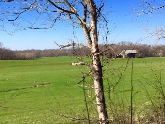 The Week On EyeEm Tree Bare Tree Tranquility Field Nature Landscape Grass Tranquil Scene Green Color No People Day Scenics Beauty In Nature Outdoors Sky Growth Branch Clear Sky Beauty In Nature Tree Trunk Tennessee