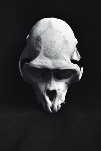 a life still........ Natural History Nature Dignity Textured Surface Black And White Photography Black And White Still Life Symmetry Kranium Primate Monkey Skull Bone  Still Life Close-up Single Object Skeleton Black Background
