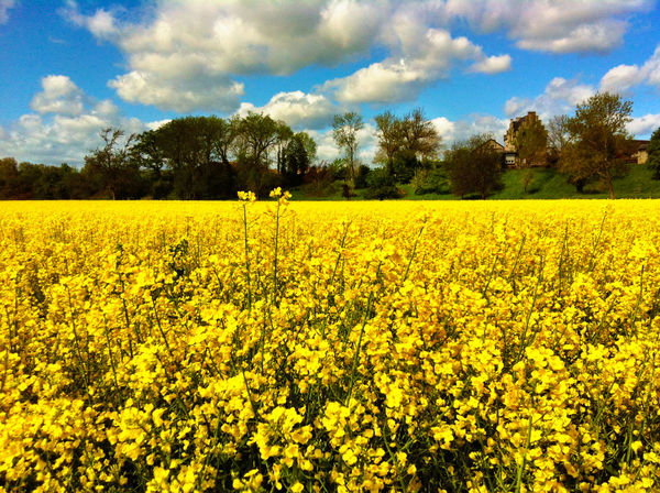 Landschaft Landscape_Collection Landscape Spring Lemon By Motorola Sunshine Yellow Yellow Flower Flowers Nature On Your Doorstep Shot in Düren
