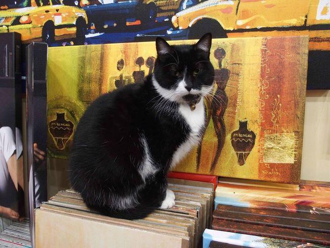 Rare Beauty Pets Funny FUNNY ANIMALS Cat
