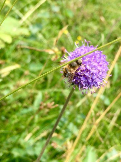Nature Bee Hiking