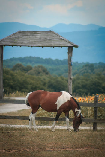 Horse in stable on field