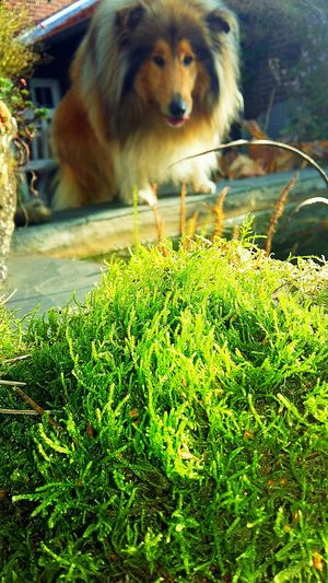 Dog Dogs Grass
