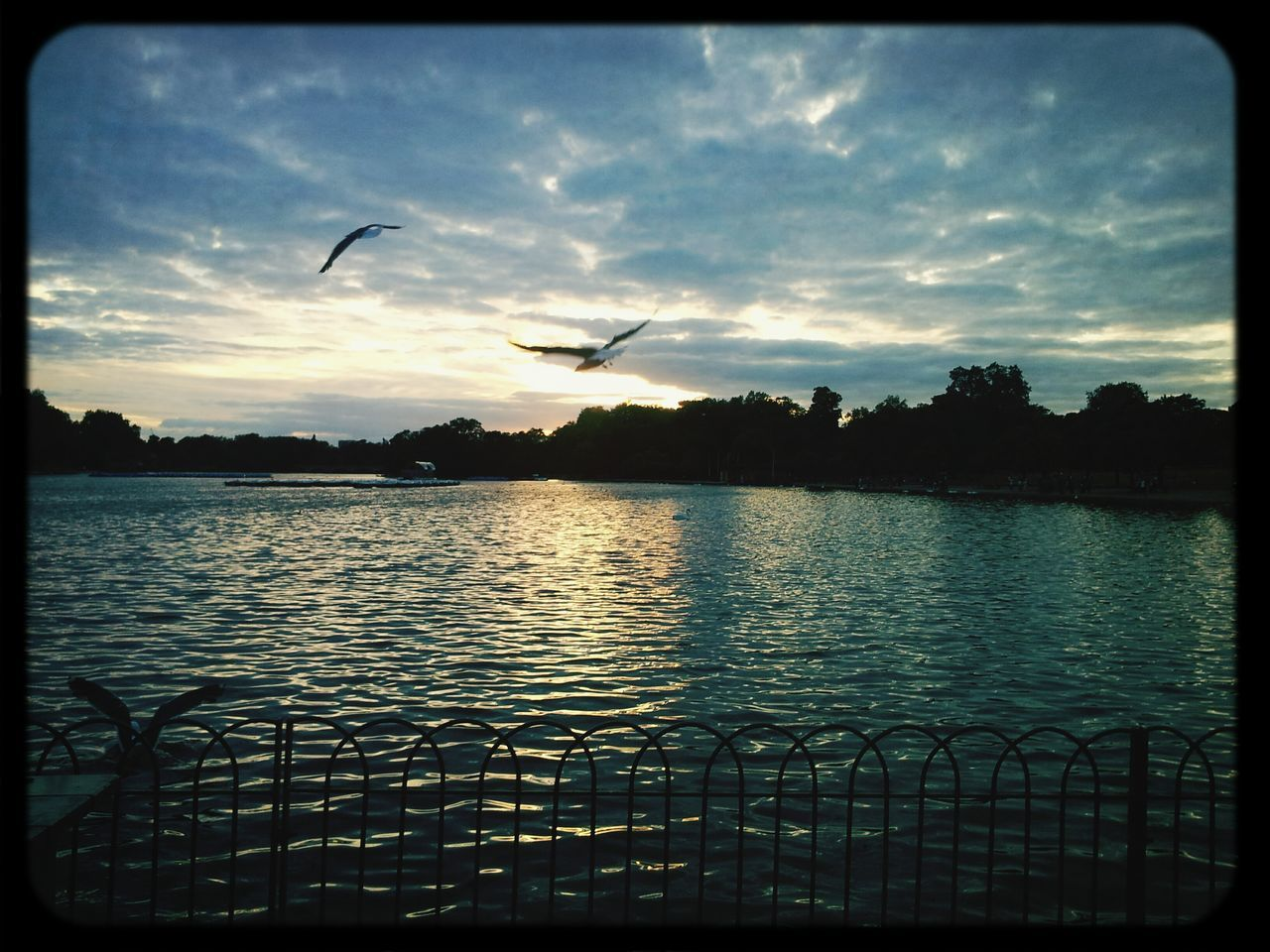 flying, sunset, silhouette, water, lake, sky, outdoors, mid-air, nature, bird, scenics, no people, beauty in nature, tranquility, tree, spread wings, animal themes, day