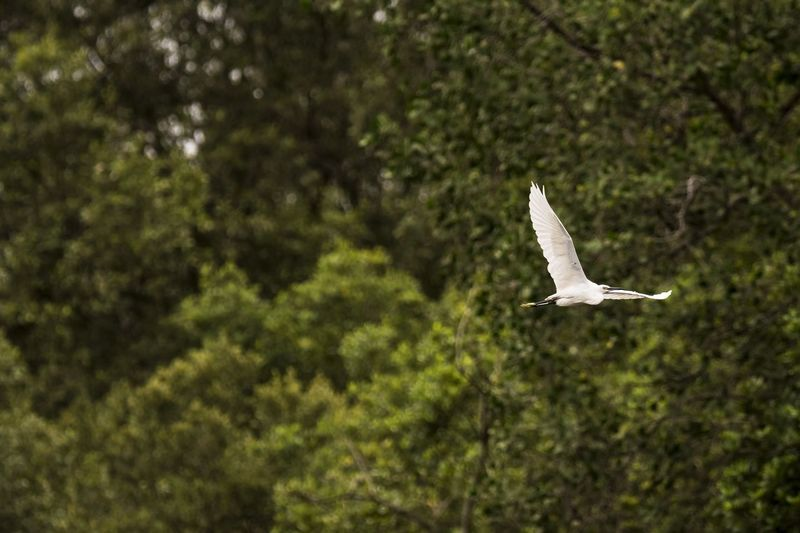 Freedom... only birds are entitled to. Flying One Animal Animal Wildlife Bird No People Spread Wings Animals In The Wild Beauty In Nature Animal Themes Little Egret Freedom Flying Birds Over The River Flight Mode Nature