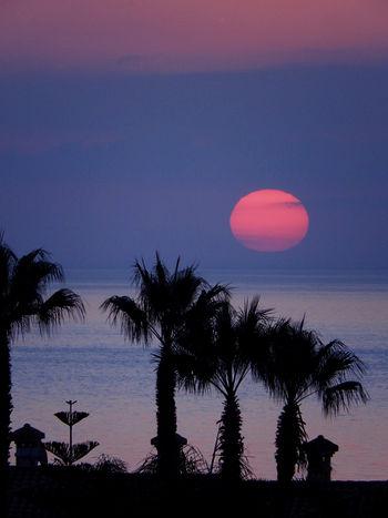 Canon EOS 600D DSLR Canon EOS 600D Sunrise Sunrise_Collection Sunrise Silhouette Sunrise Over Water Sunrise Over Sea Sunrise... Sunrise Porn Sunrises Sunrise Colors Sunrise Photography Sunrise Over The Sea Palm Tree Silhouette Palm Tree Silhouettes