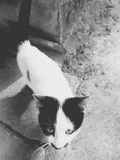 Black & White Cats Of EyeEm Blaxkandwhite Catseyes Catselfie Blackandwhite Photography