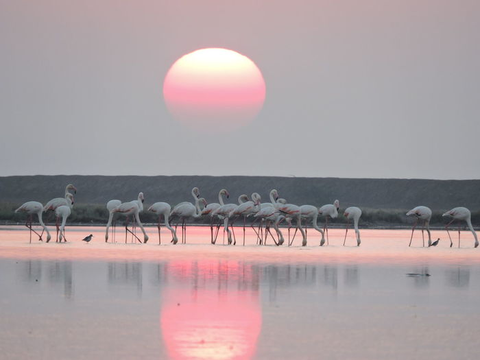 Pink Color Nature Reflection Lake Sunset Beauty In Nature Bird Flamingo Animal Wildlife Animals In The Wild Large Group Of Animals Water Animal Animal Themes No People Sun Outdoors Flock Of Birds EyeEmNewHere