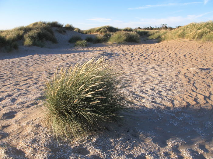 Arid Climate Beach Day Environment Grass Growth Land Nature No People Non-urban Scene Outdoors Plant Sand Sky Sunlight Tranquil Scene Tranquility