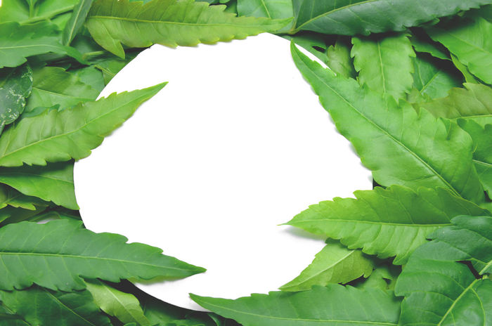 A large number of neem foliage are spread on a white background. Leafs Natural Nature Neem Plants Shape Top View Arrangement Background Texture Card Collocate Colorful Decoration Leaf Leaves Minimal No People Pattern Petals Plant Spring Textile Texture Wallpaper