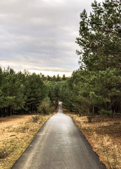 Small Road in the forest Progress Forward Path Street Tree Plant Direction The Way Forward Sky Cloud - Sky Nature Transportation Road Tranquil Scene Tranquility Beauty In Nature Land Day Environment Scenics - Nature