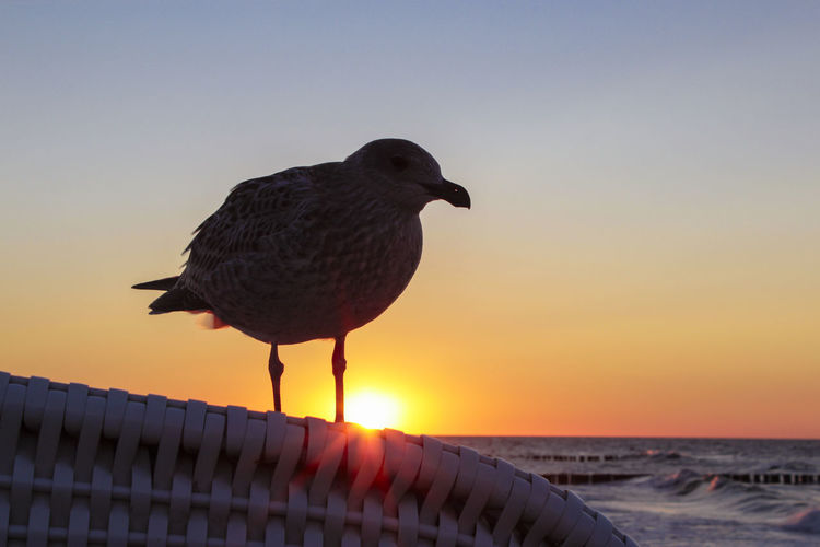 Close-up of seagull on whicker chair at beach against sky during sunset