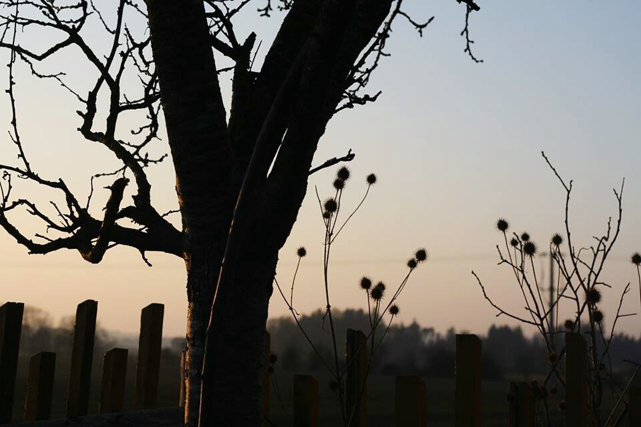 growth, nature, tree, plant, sunset, outdoors, no people, beauty in nature, bare tree, branch, sky, day