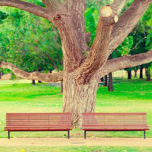 Simple things like these two benches with a beautiful old tree and lush green grass in the backdrop makes this world such a beautiful place :-)