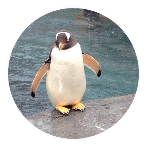 ペンギンくん。