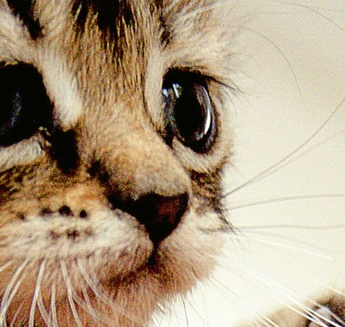 Love my cat Kittys  Cats Cat Lovers Cute Catoftheday Pets Love Kitty Cat Catlovers Cat Eyes