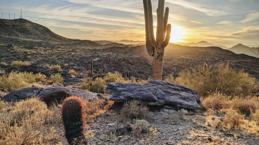 Cactus growing on rock against sky