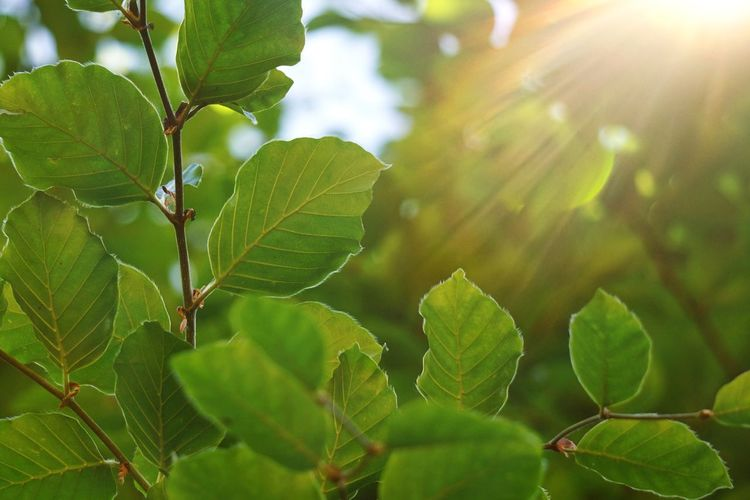 green leaves and branches in the nature in summer Leaf Leaves Green Green Color Branch Branches Nature Backgrounds Abstract Textured  Plant Part Summer Bright Light Sunlight Freshness Fragility Growth Plant Close-up Beauty In Nature No People Day Outdoors