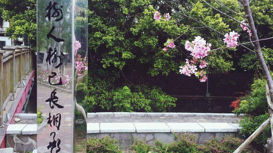 桜? Flowers Yachu Nhcue