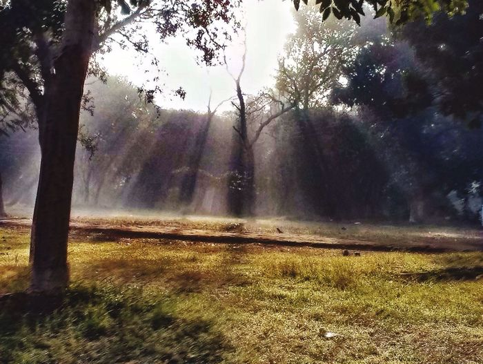 Sunlight streaming through trees on field