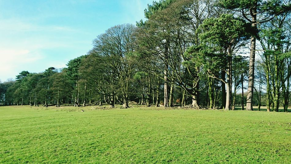 Tree Nature Grass Growth No People Day Outdoors Sky Landscape Lush - Description Tatton Park Cheshire Life National Trust 🇬🇧 Grass Country Park Open Space Beauty In Nature Countryside Uk Idyllic England🇬🇧 EyeEm Landscape