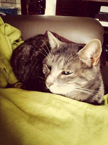 Le chat de ma demie