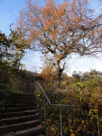 Lüneburg Kalkberg Lüneburger Altstadt Baum Beauty In Nature Berg Day Green Color Growth Idyllic Landscape Nature No Filter No People Non Urban Scene Non-urban Scene Outdoors Plant Scenics Sky Stairs The Way Forward Tranquil Scene Tranquility Tree Wood - Material Hidden Gems