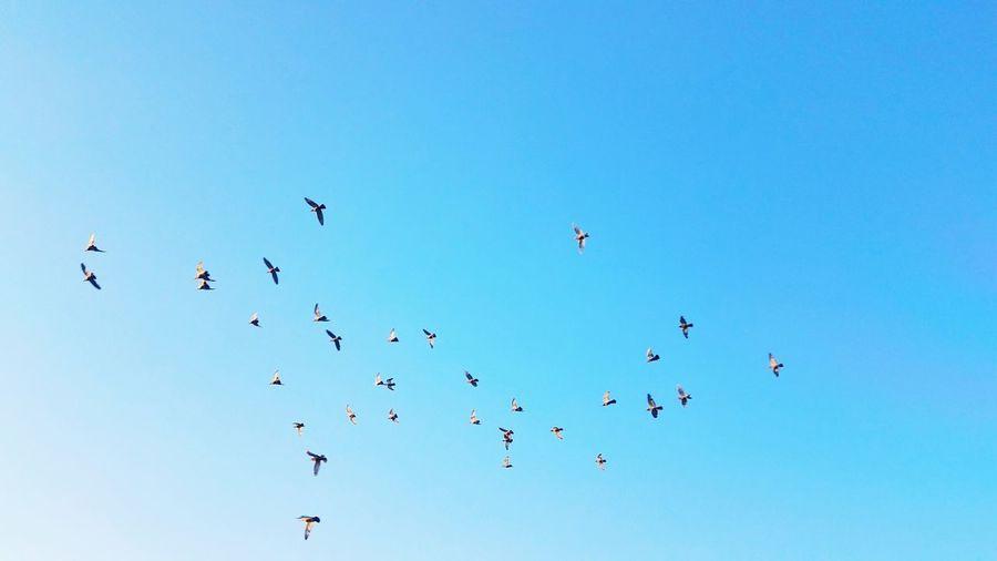 Flying Flock Of