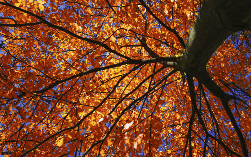 Red passion Autumn Backgrounds Beauty In Nature Branch Change Close-up Day Full Frame Leaf Low Angle View Nature No People Orange Color Outdoors Sky Tree