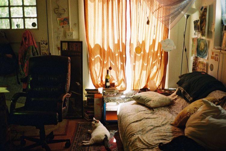 Cat Room 35mm