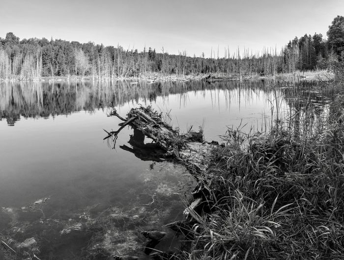 Summer at Mono Cliffs Provincial Park in black and white Mono Cliffs Provincial Park Water Lake Tranquil Scene Tranquility Reflection Tree Plant Beauty In Nature Scenics - Nature No People Day Sky Nature Non-urban Scene Idyllic Outdoors Land Forest Growth Ontario Canada