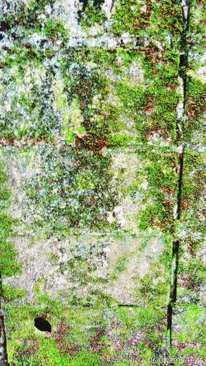 The Architect - 2018 EyeEm Awards Backgrounds Full Frame Tree Close-up Grass Green Color EyeEmNewHere