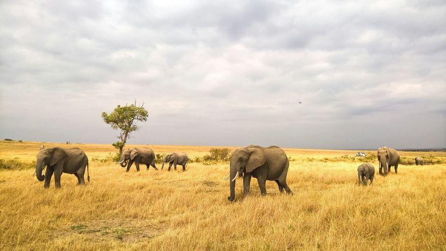 Colour Of Life Herd Of Elephants Masai Mara Africa